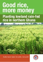 Good rice, more money: Planting lowland rain-fed rice in northern Ghana