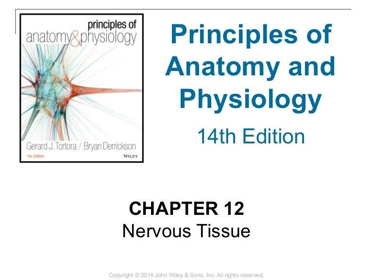 12 Chapter 12 Nervous Tissue
