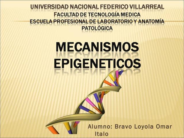 13.mecanismo epigenéticos