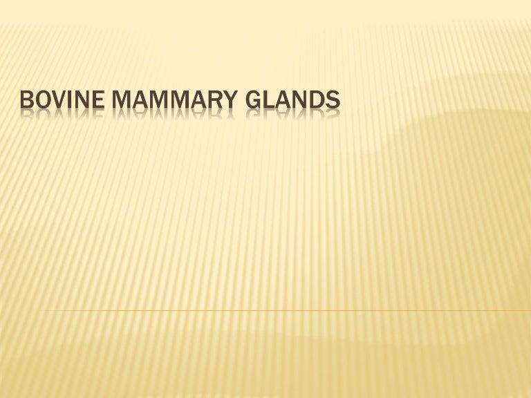 16 Bovine Mammary Glands Complete