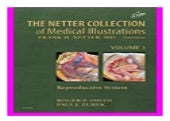 the. Netter Collection of Medical Illustrations  Reproductive System  Netter Green Book Collection  book 947
