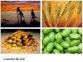 COMMODITY MARKETS-UPDATES & ANALYSIS