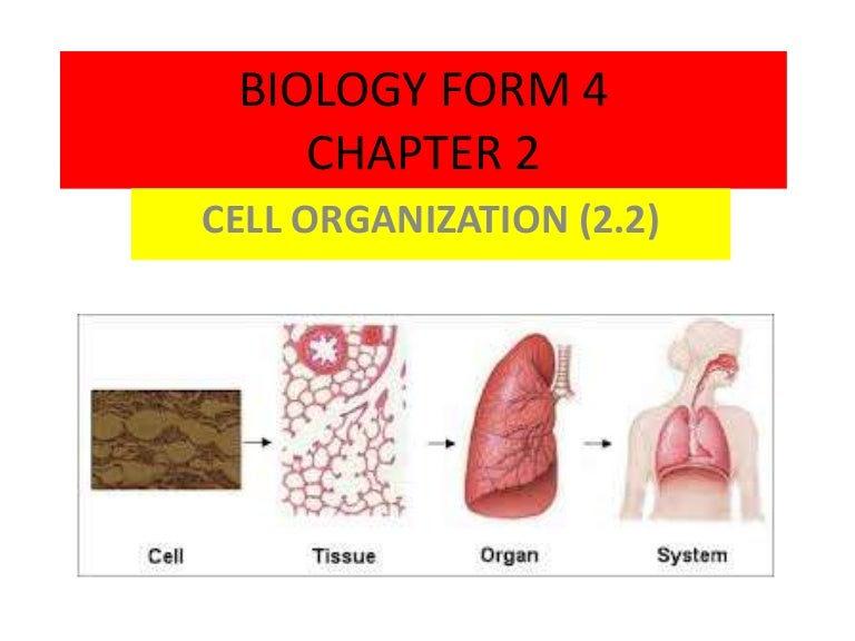 biology chapter 4 Notes (form 4) (click the links to download your notes) chapter 1: introduction of biology 1 introduction of biology 2the scientific investigation.