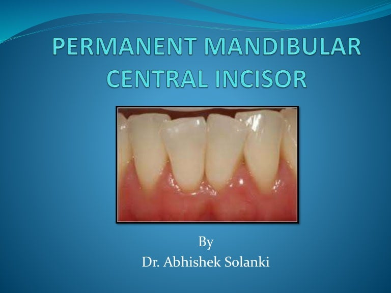 Permanent Mandibular Central Incisor