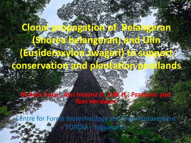Clonal propagation of  Belangeran (Shorea belangeran) and Ulin (Eusideroxylon zwageri) to support conservation and plantation peatlands