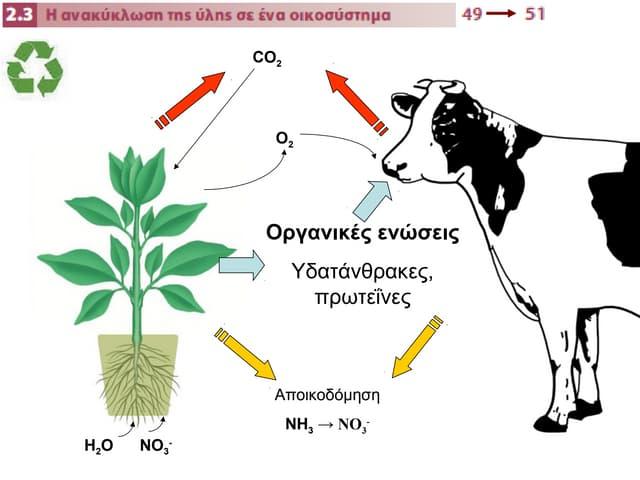 2.3 η ανακύκλωση της ύλης σε ένα οικοσύστημα
