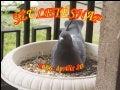 2006.04.20.   A születés napja