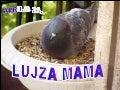 2006.04.23.   Lujza Mama