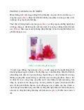 24. phấn nụ làm sáng da tự nhiên