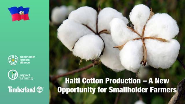 Haiti Cotton Production – A New Opportunity for Smallholder Farmers – Hugh Locke