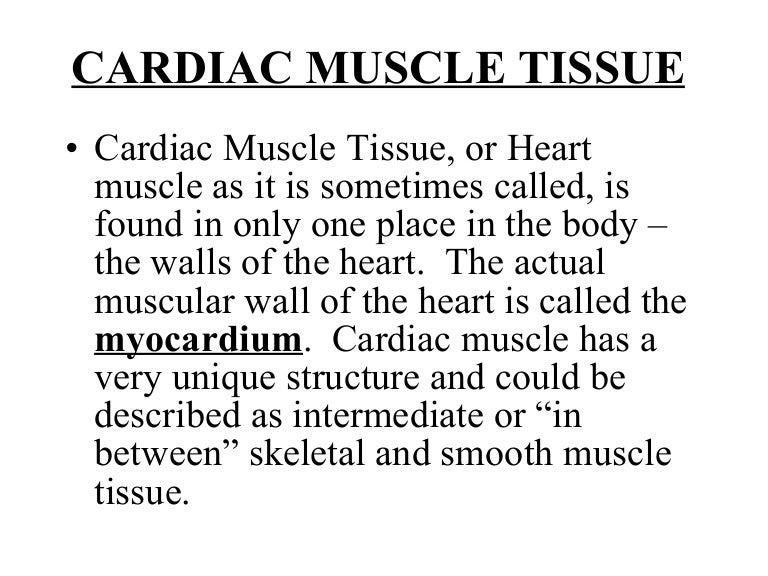 3 Cardiac Muscle Tissue