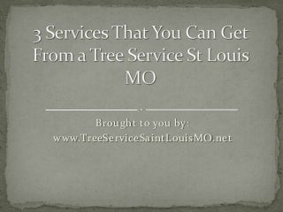 3 Services That You Can Get From a Tree Service St Louis MO
