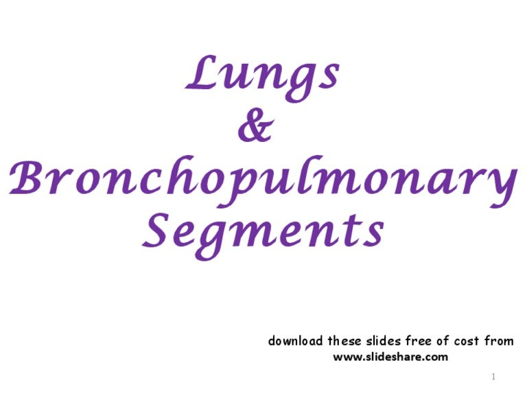 lungs bp segments