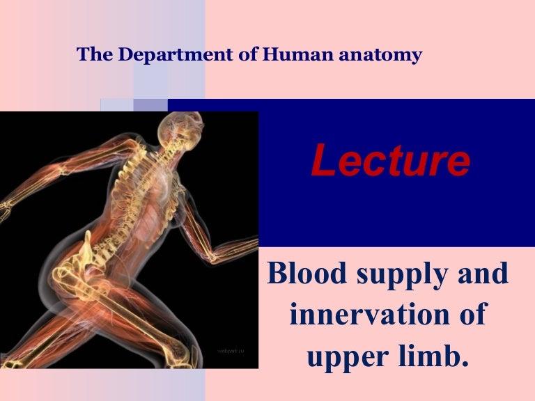 Blood Supply Innervation Of Upper Limb