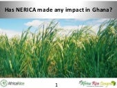 Th4_Has NERICA made any impact in Ghana?