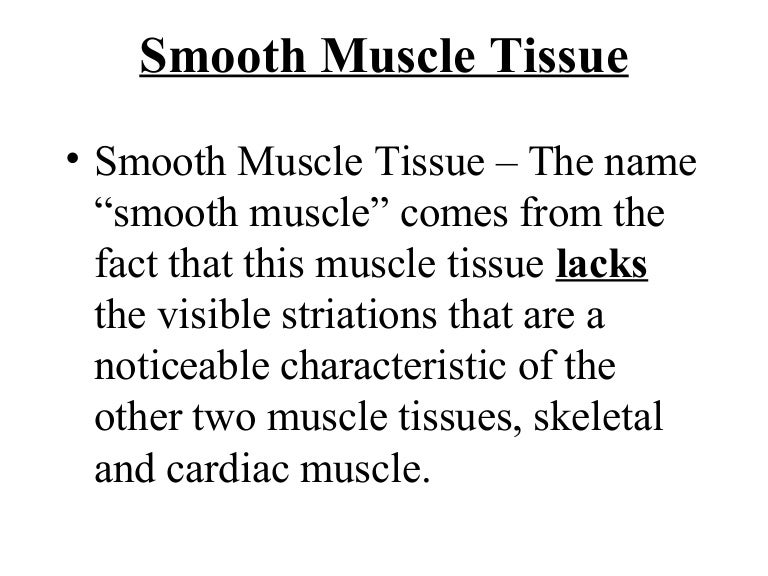 4 Smooth Muscle Tissue