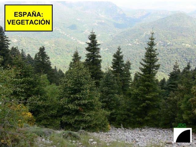 ESPAÑA: VEGETACION