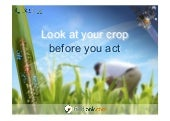 Look into your crop before you act