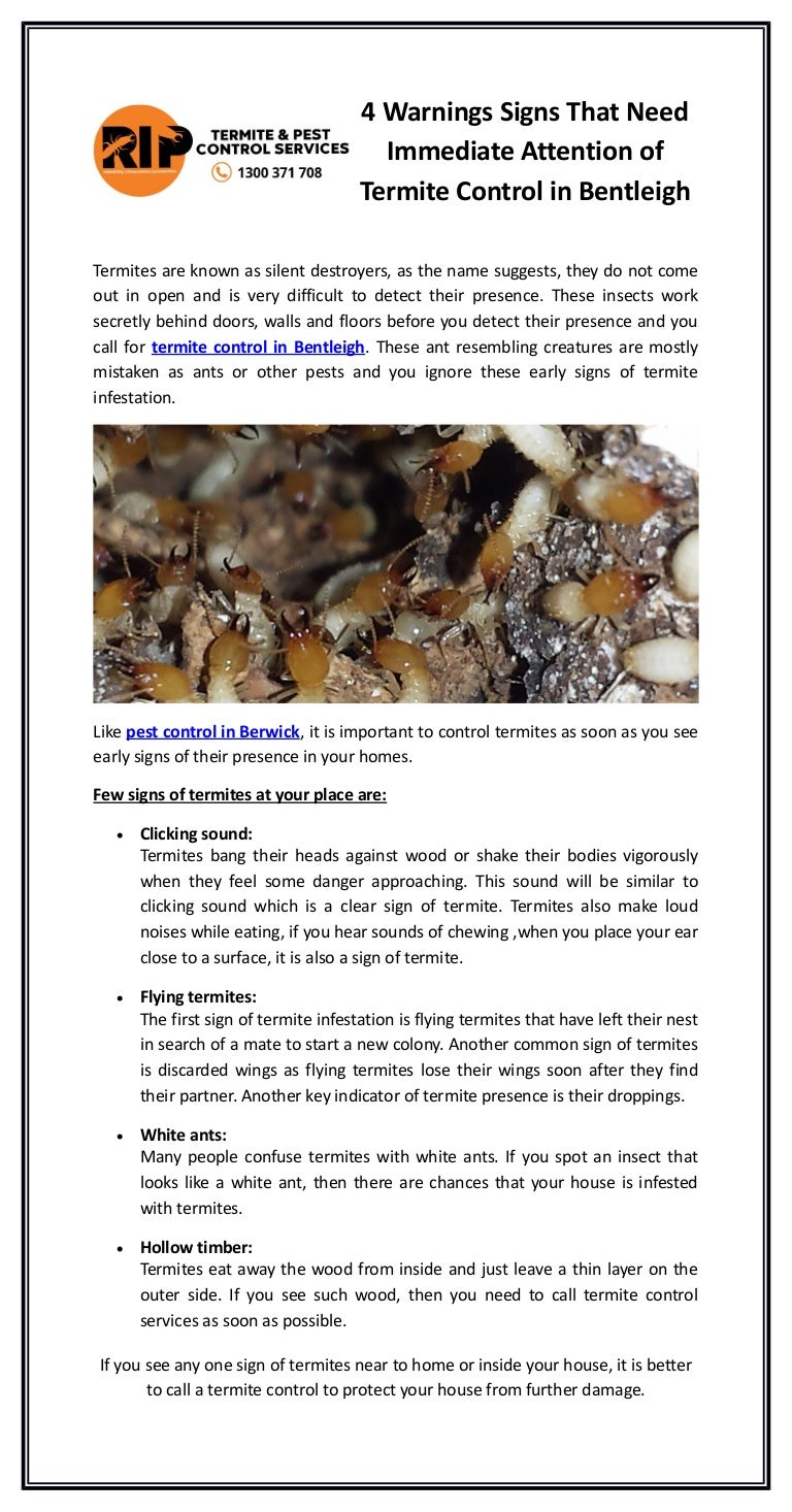 4 Warnings Signs That Need Immediate Attention Of Termite Control In