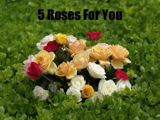 5-roses-for-you-1215321490133168-9-thumb