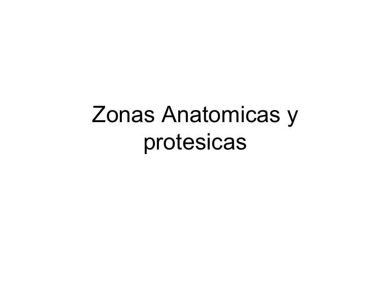 53381261 zonas-anatomicas-y-protesicas