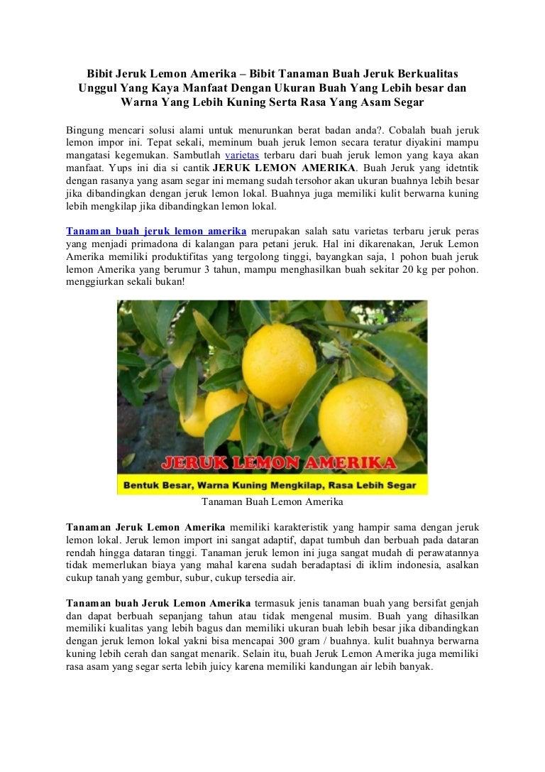 Bibit Jeruk Lemon Amerika Bibit Tanaman Buah Jeruk Berkualitas Ungg