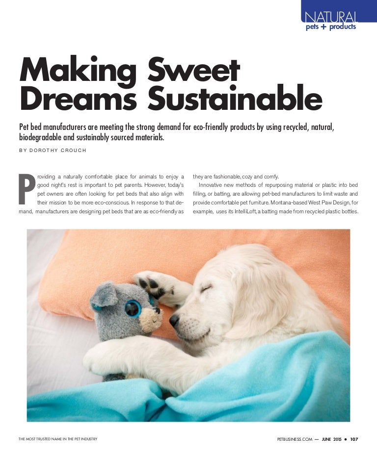 Making Sweet Dreams Sustainable Pet Business
