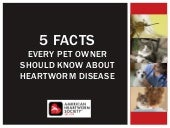 5 Facts Pet Owners Should Know About Heartworm Disease