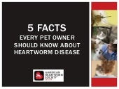 Five Facts about Heartworm Disease