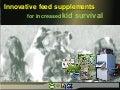 Innovative preweaner supplements: increasing kid survival - EA_Orden