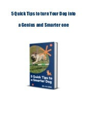 5 quick tips to turn your dog into a genius and smarter one
