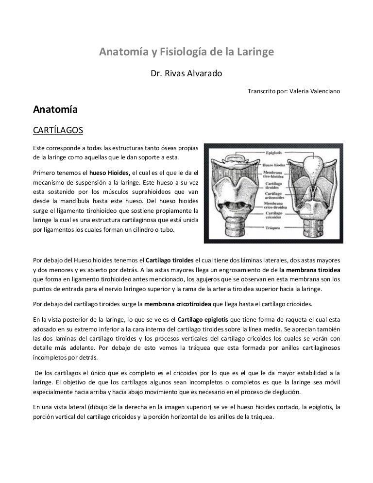 6. anatomía-y-fisiología-de-la-laringe