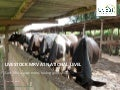 Livestock MRV at national level