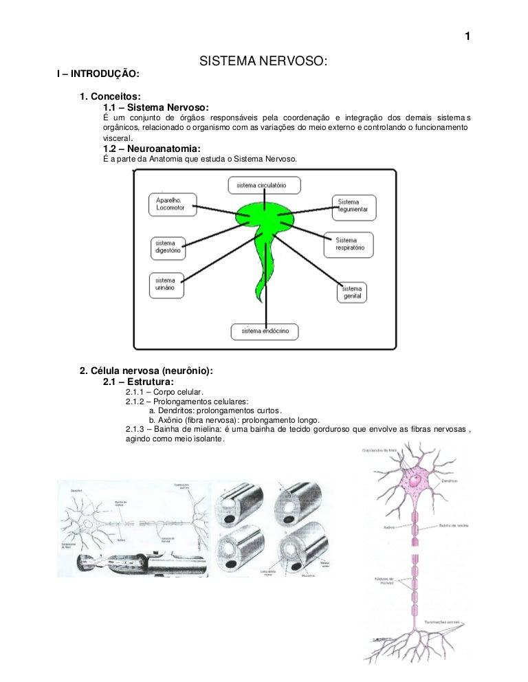 6 Sistema Nervoso