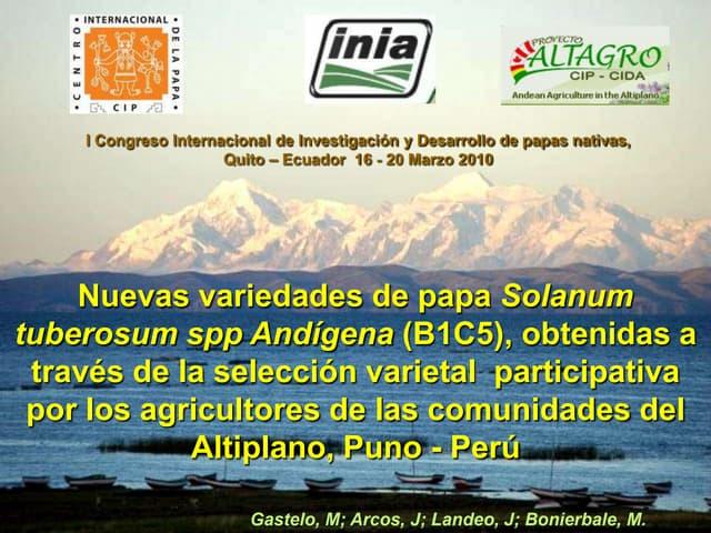 Nuevas variedades de papa Solanum tuberosum spp Andígena(B1C5), obtenidas a través de la selección varietal  participativa  por los agricultores de las comunidades del Altiplano, Puno -Perú