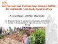 Engineering Food and Cash from Cassava (EFCC):for sustainable rural development in Africa