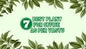 7 Best Plants For Office as per Vastu