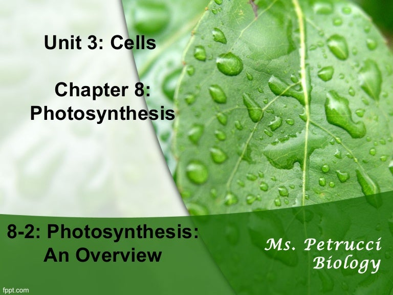 8-2 photosynthesis an overview