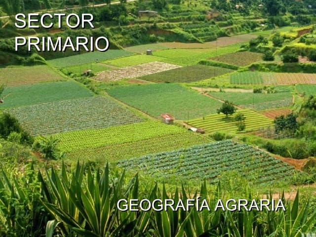 SECTOR PRIMARIO: LA AGRICULTURA