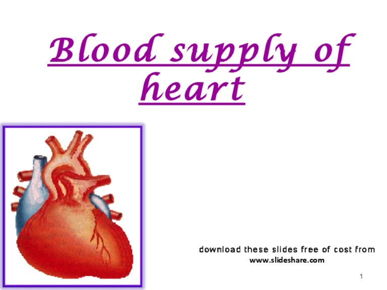 blood supply of heart