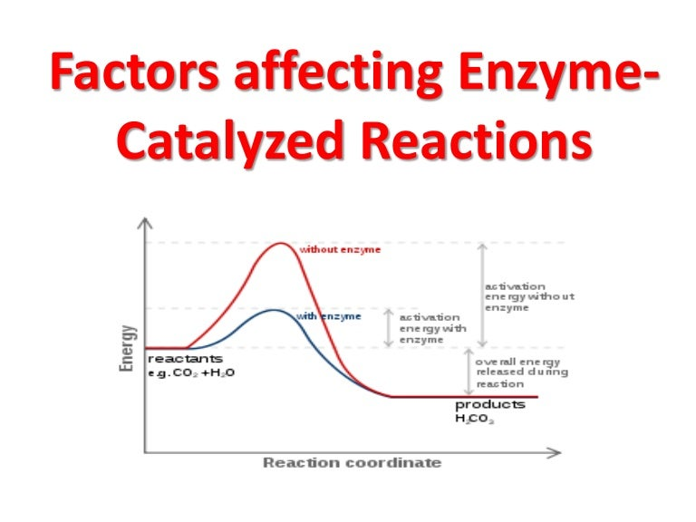 factors affecting enzymes rh slideshare net