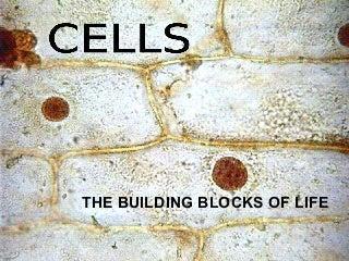 'cells' on SlideShare