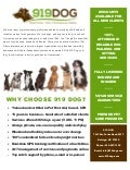 919dog Com Local Dog Walking Amp Pet Sitting Services In