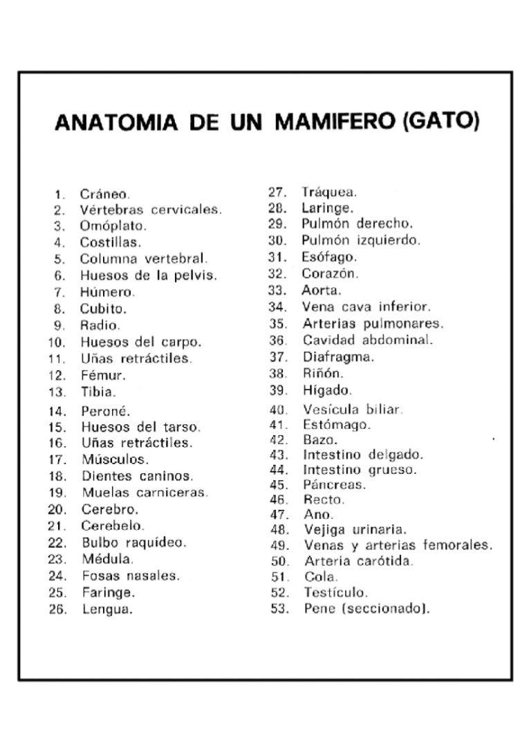Asombroso Anatomía De Una Clave De Coloración Hueso Embellecimiento ...