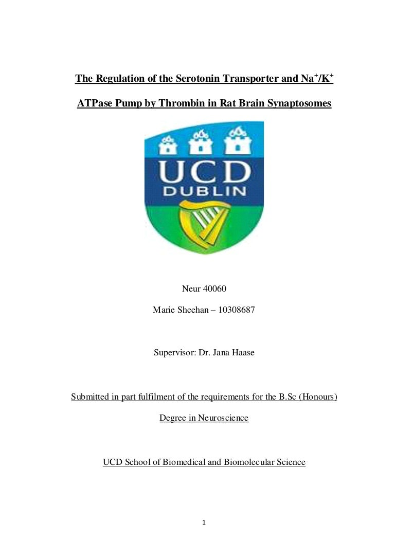 Dissertation write up funding