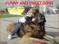 Funny and Sweet Dogs (Cmp)