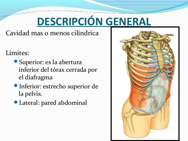 musculo transverso del abdomen irrigacion