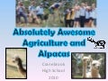 Absolutely Awesome Agriculture and Alpacas Amber O'Neill