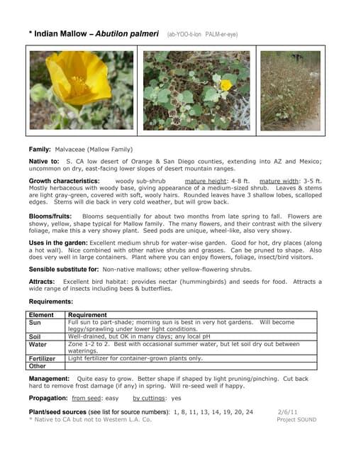 Gardening Sheet Salvia Cedrosensis