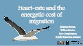 Heart-rate and the energetic cost of migration (Morgan Brown)